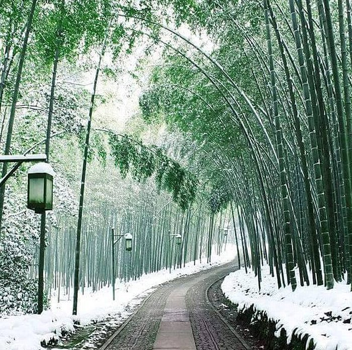 Snowy path of bamboo in Arashiyama.jpg