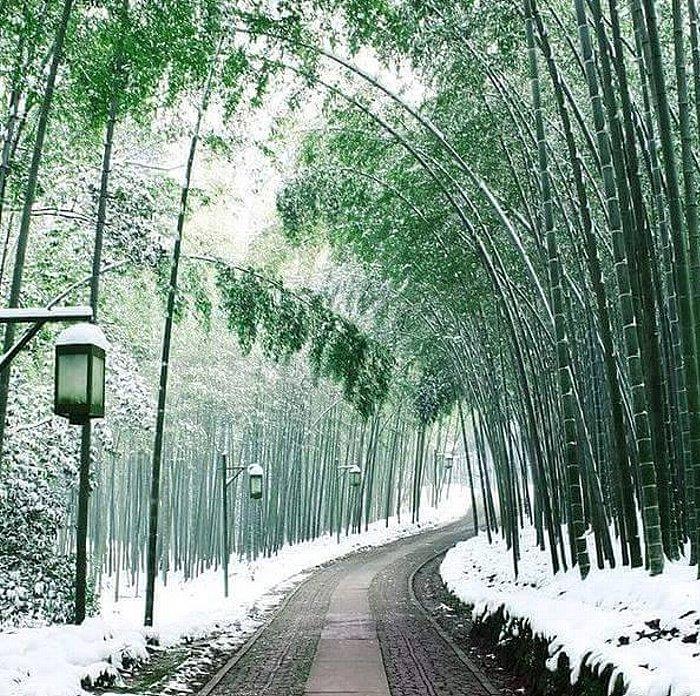 Snowy path of bamboo in Arashiyama.jpg