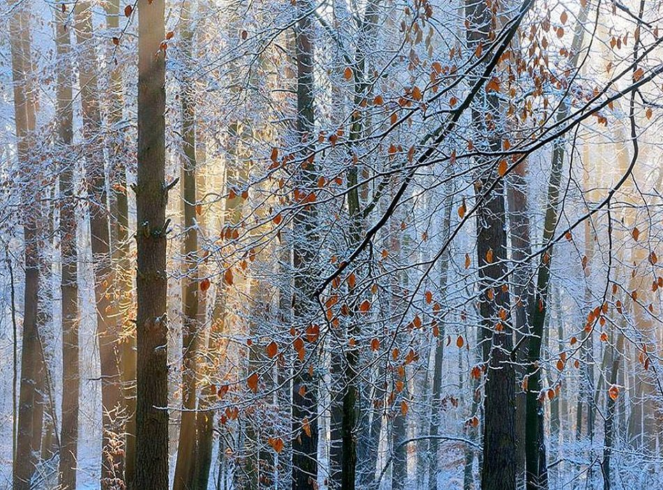 The one morning with sun & snow.jpg
